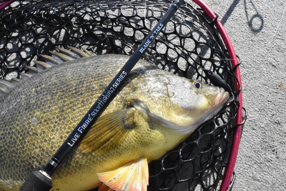 Wilson Fishing Blade N Tails Ultralight Elite